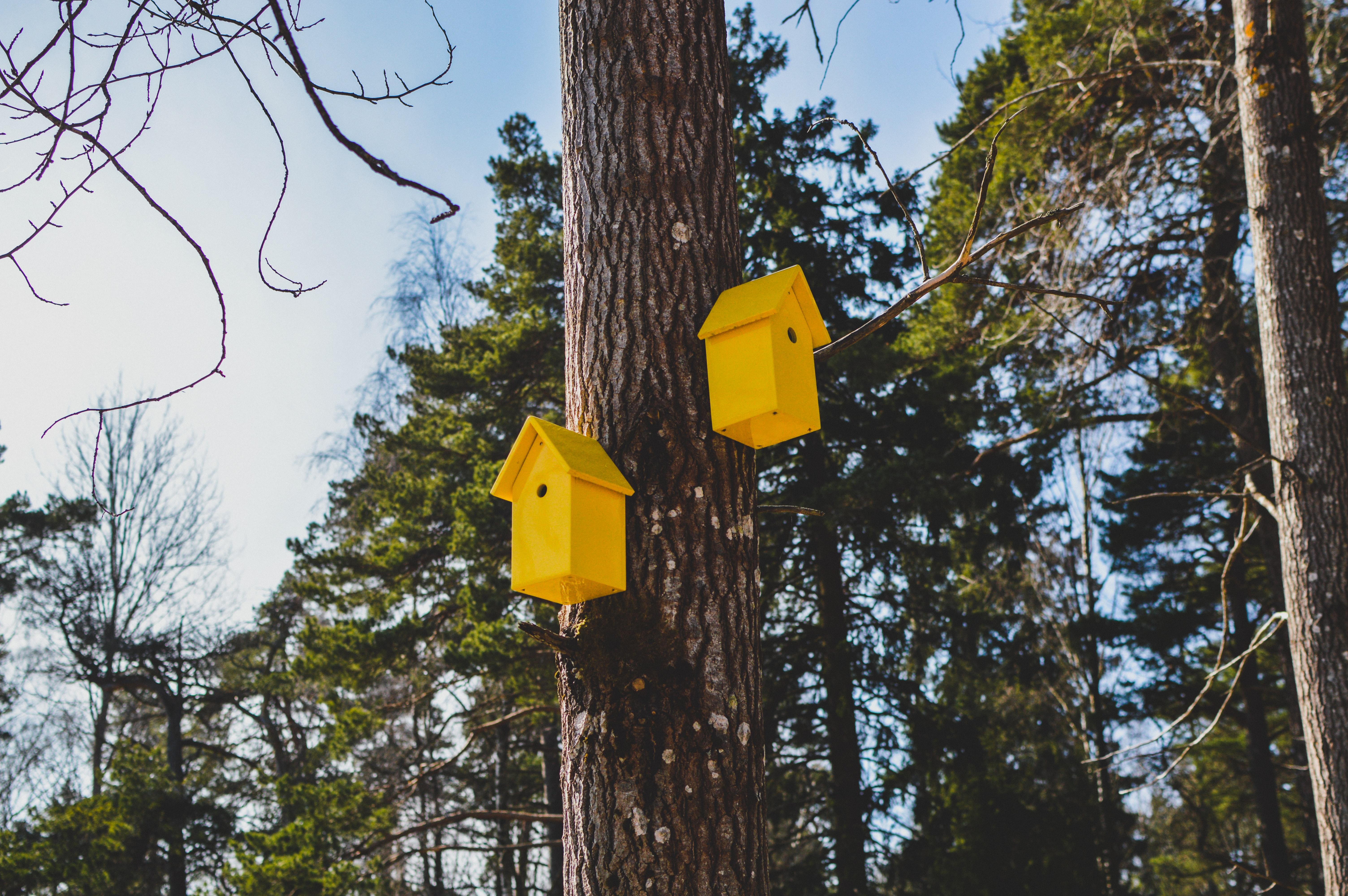 Konkurs na wykonanie budki lęgowej dla ptaków oraz/lub domku dla pożytecznych owadów - edycja 2020