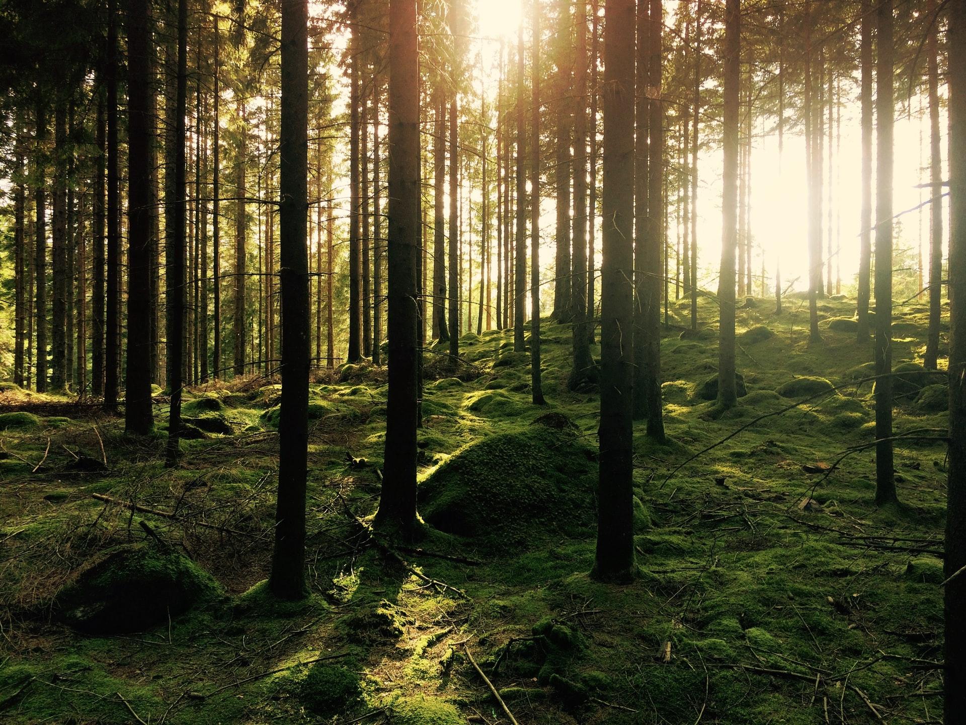 Konsultacje w sprawie wyznaczenia lasów referencyjnych