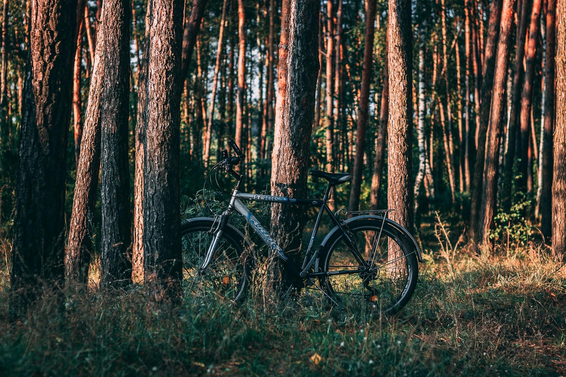 Opinia na temat ścieżek rowerowych w regionie